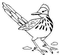 Small Picture Roadrunner coloring page Coloringcrewcom