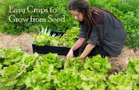 easy crops to grow from seed
