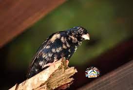 Ava Birds - Posts | Facebook