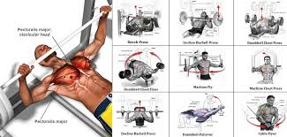 Chest Chart Gym High Quality Chest Workout Chart Step By Step 2019