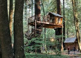 And the handmade treehouse that JT built, lofted among the trees, offers a  spot for him to sleep in the summer or just to sneak away and read.