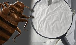 20+ Can Bed Bugs Spread Disease Gif