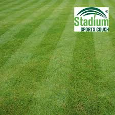Grass Couch Wintergreen Turf Couch Hanceys Turf