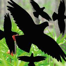 Vogel Gegen Fenster Angenehm 6x Vogel Silhouetten Fenster Glas