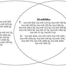Genesis 1 And 2 Venn Diagram Venn Diagram Of The Overlap Of Mirna Profiles In Comparative