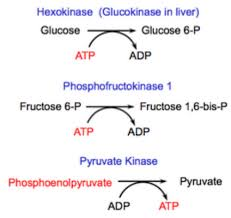 Glycolysis Flow Chart Glycolysis Diagram Steps Pathway Cycle Products