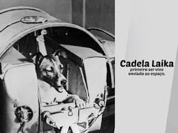 Homenagem a cadela Laika, uma heroína involuntária - Sanol Dog
