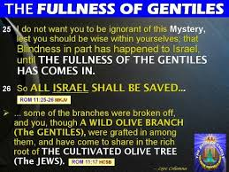Image result for the gentiles have been grafted in