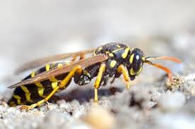 pest control eugene. Beautiful Eugene Daveu0027s Pest Control INC Can Send Those Pests Packing In Eugene C