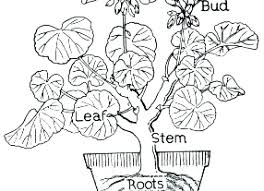Photosynthesis Coloring Worksheet Activity High School Pages Botany
