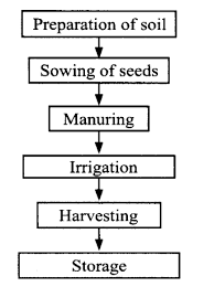 List The Steps Involved In Crop Production In A Flow Chart