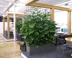 plants for office space. beautiful office 10 best indoor inspirations images on pinterest  gardening plants  and office with plants for space d