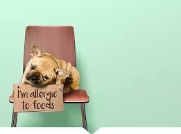 APOQUEL: Atopic Dermatitis Oclacitinib Tablet Treatment for Dogs ...