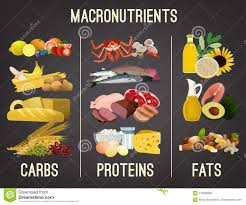 Food Chart Carbohydrates Fats Protein Main Food Groups Stock Vector Illustration Of Chart 119268362