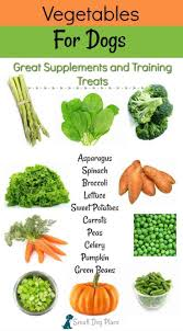 Vegetables For Dogs 20 Nutritious Treats For Your Dog