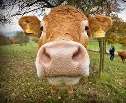 Отрасли животноводства Районы производства продукции животноводства Животноводство