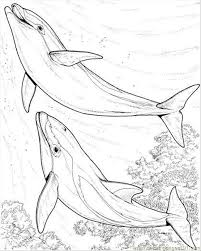 Two Dolphin Coloring Page Coloring Page Free Dolphin Coloring