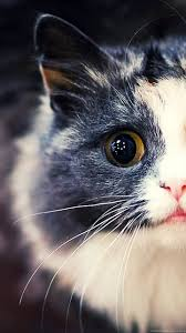 cat wallpaper tumblr iphone. Wonderful Cat Fullscreen For Cat Wallpaper Tumblr Iphone U