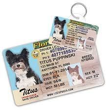 Supplies 2 Pets Dog License Pet Florida Tags For Custom Driver aBZqWzd6