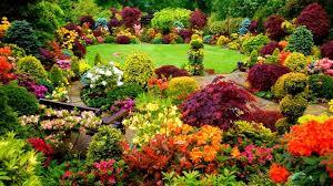 wallpaper beautiful backyard garden colorful garden