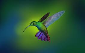 hummingbird wallpaper from deepin os