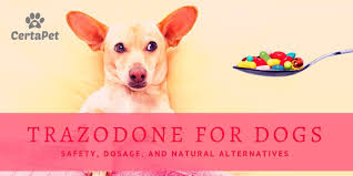 Trazodone For Dogs Safety Dosage And Natural Alternatives