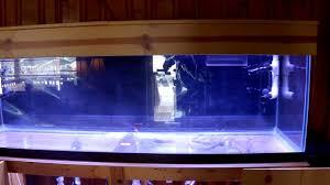 125 Gallon Aquarium Light Hood 125 Gallon Reef Aquarium Setup 8 Led Lighting Installed Mp4