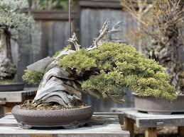 bonsai garden at lake merritt gift card
