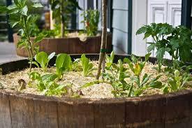 barrel garden. $305.00 Barrel Garden