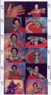 The Iguana Den Iguana Care Iguana Growth
