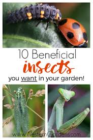 10 beneficial insects you want in your garden if you spot these in your yard