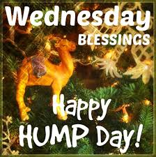 Wednesday Blessings Happy Hump Day Pictures Photos And Images For