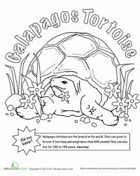 Small Picture Color the Galapagos Tortoise Worksheet Educationcom