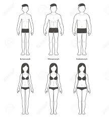男性と女性の体の種類 痩せ型の人中胚葉型体格肥満型の人細い筋肉と脂肪の