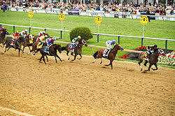 2013 Preakness Stakes Wikipedia