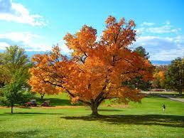 秋天的树,秋,自然高清图库素材免费下载(图片编号:6755136)-六图网