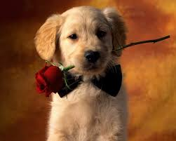 cute animal valentines day wallpaper. Beautiful Valentines 2560x2048 Animal  Dog Red Rose Puppy Pet Cute Wallpaper And Valentines Day