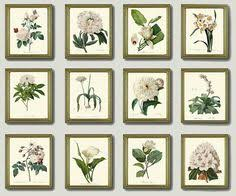 Small Picture BOTANICAL Print SET of 6 Art Prints 8X10 Redoute Blue Flower