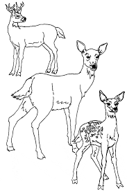 Small Picture Deer coloring page