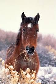 лошади курсовая работа