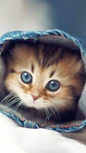 Cute Kittens Wallpapers For iPhone 6 ...