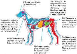 Magen darmprobleme beim hund