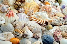 Seashells Design Colorful Ocean Seashells 2 Photograph By Andee Design