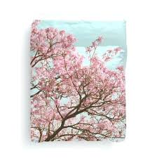 n natori cherry blossom duvet cover pink tree mint blue