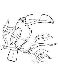 Small Picture Toucan coloring pages Download and print Toucan coloring pages