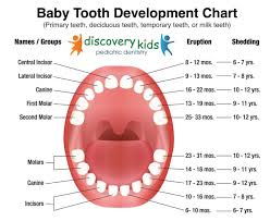 Teething Chart For Babies Permanent Tooth Eruption Pediatric Dentist In Frisco Baby Teething