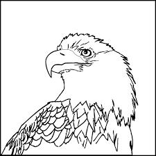 Bald Eagle Head Coloring Pages Coloringstar