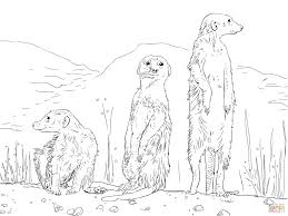 three meerkats coloring page meerkats coloring pages free coloring pages on meerkat coloring pages
