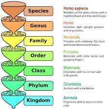 Biological Classification Chart The Biological Classification System Lessons Tes Teach