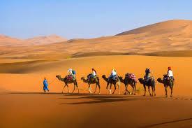 Risultati immagini per oasi nel deserto con generali che mangiano
